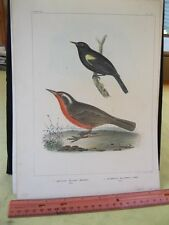 Vintage Print,YELLOW WING BLACK BIRD,U.S.Astrological Expedition,Chromo,1855,#2