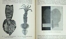 GRAVURES. SCIENCES. ALBERT1° DE MONACO. 1900  E.O.
