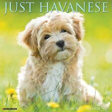 Just Havanese (dog breed cal) 2021 Wall Calendar (Free Shipping)