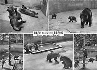 BF39413 bern switzerland   bear ours   animal animaux