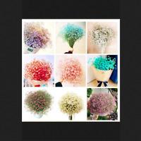 Multi-Color Gypsophila Bonsai Paniculata 100 Pcs Seeds Gypsophila Flowers Garden