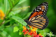 VLIES Fototapete-SCHMETTERLING-(2842ah)-Natur Insekt Wandbild Dekoration