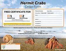 COUPON to Redeem for 2 Live Pet Purple Pincher Land Hermit Crabs