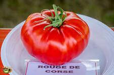 graines de tomate rouge corse vendu en sachet de 30 graines