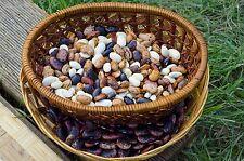 Bulgarische  Bohnen, Feuerbohnen und Bunter Mix 30+ Körner Saatgut Bohne