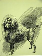Cleanthe Fancy French Poodle 1933 Dog Art Print Matted