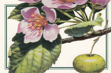(10754) Postcard Prairie Crab Apple Flowering Trees  USPS 1998 issued
