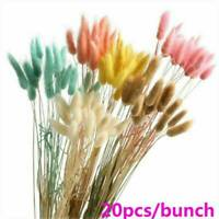 20* Dried Flowers Bouquet Rabbit Tail Grass Real Flower Weddings Home Decor DIY