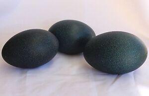 Empty Emu Egg (1 egg)