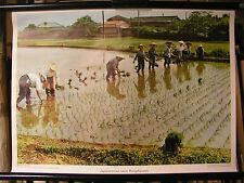 Schulwandbild Wall Picture Old Japan Japanese Women Reispflanzen Asia 71x51cm