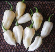 10 Graines de piment  Fatalii White Chilli pepper Seeds