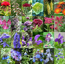 3x Hardy Perennial Cottage Garden Wildflower Bee plants 9cm pots. Any mix of 3!