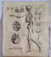 Caspar Wistar System Of Anatomy Medical Book Anatomical Plates 1830