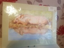 Vintage Original Signed Watercolour Painting Sleeping Pig