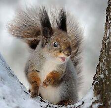 10 Christmas Cards Quality Pack - Wildlife Squirrel Fox Deer Robin Owl Pheasant