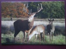 Deer Collectable Animal Postcards