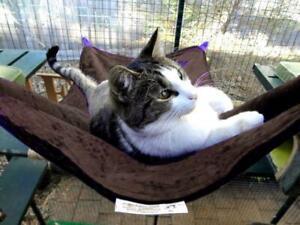 LUXURICAT HAMMOCK, KHAKI BROWN VELVET, REVERSIBLE, CAT BED, CAT LOUNGER