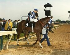 SECRETARIAT - BEAUTIFUL 8X10 COLOR PREAKNESS HORSE RACING PHOTO!