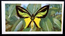 Tailed Birdwing Butterfly  of New Guinea    Vintage Colour Card # VGC