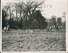 1927 Hertfordshire Hunting Hound Brocket Hall Meet Hatfield England Press Photo
