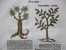 Incunable Leaf Hortus Sanitatis Sumach Colored Woodcut Venice - 1500