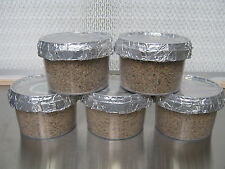 5x Magic farm's PF tek oyster mushroom grow pot kit (medium size).