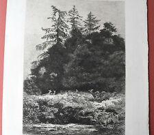 Karl BODMER 1809 1893 DAIMS dains un PARC Eau Forte Originale