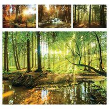 Vlies Fototapete Wald Bach Flur Sonne Grün Natur Landschaft Wandtapete Bäume XXL