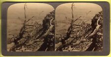 Stereoscopic Card - Grand Canyon, Arizona,Red Canyon Trail - Underwood