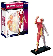 4D MUSCLE & SKELETON Human Bones Body Anatomy 3D Puzzle Model science Medical