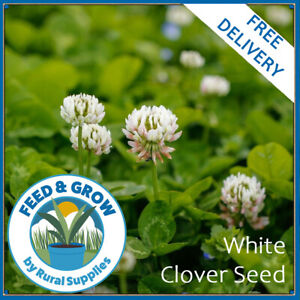 White Clover Green Manure Seeds | ORGANIC GARDEN MANURE | VARIOUS QUANTITIES