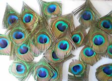 Pack of 5 Large Trimmed Peacock Eye Feathers - SECONDS - Scrapbooking, Fishing