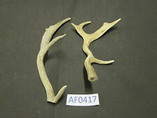 2 Fallow Deer Antlers bases cutoff for Crafts Home Cabin Office Wildlife Af0417