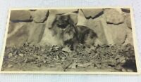 "Vintage Pekingese Photo 1932 Sepia ""Wenlow"" Adorable Picture Photograph"