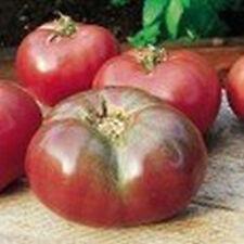 Tomate - Cherokee Purple 10 Samen Tomatensamen