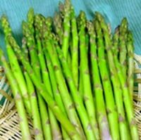 NonGMO Seeds Heirloom ASPARAGUS Mary Washington❋200 SEEDS❋HEAVY YIELDS❋Perennial