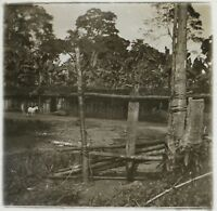 Africa Gandjicolo Congo Foto NE21 Placca Da Lente Stereo Vintage Ca 1910