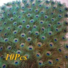 10Pcs 100% Real Natural Peacock Feathers 25-30cm Festival Party Decoration