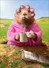 Morning Ground Hog Funny Just for Fun Card - Greeting Card by Avanti Press photo