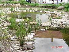 wasserreinigendes und blühendes Sortiment mit 30 Teichpflanzen Filterpflanzen