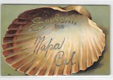 Souvenir from Napa, California Seashell Clamshell 1909 Vintage Embossed Postcard
