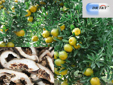 DR T&T Zhi Qiao (frutti) Aurantii Arancio Amaro 100g erba secca