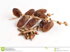 12 Date fresh tree/plant/fruit seeds (date palm/raisin/plum)  *5 free lychee*