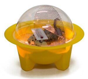 GQF Chickbator Mini Dome Best Small Incubator Chicken Egg Hatching School Projec