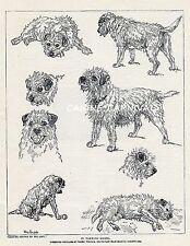 Interesting Sketches In Varying Moods Border Terrier Dog 1934 Vintage Art Print