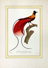 Jacques Barraband Loiseau de Paradis ROUGE poster stampa d'arte immagine 54x39cm