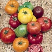 TOMATE PURPURA  Purple Tomato Antioxidant Organic 25 semillas seeds graines