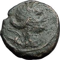 AMPHIPOLIS in MACEDONIA 1stCenBC RARE R1 Ancient Greek Coin ARTEMIS BULL i59747