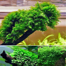 500Pcs Aquarium Pearl Moss Seeds Ornamental Plants Water Grass Seeds Live Plant-