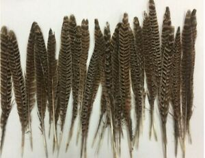 20pcs Natural Pheasant Tail Feathers 12-14 Inch Long Tail Feathers DIY Decor--